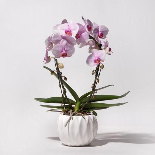 Orchideenbogen in Rosa mit Keramik Übertopf
