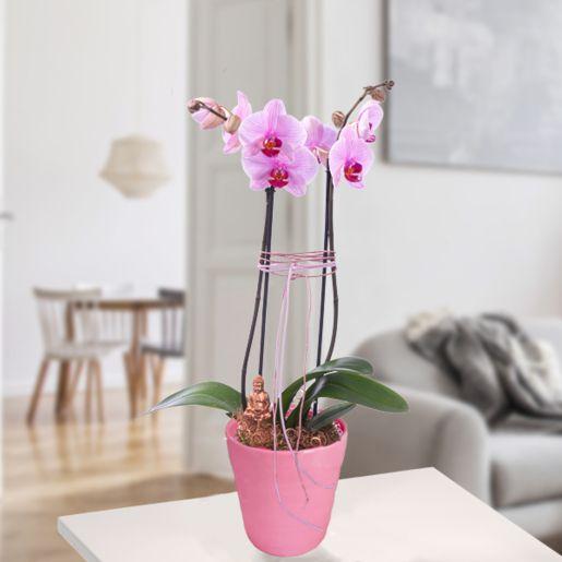 Pinke Orchidee mit Buddha-Stecker