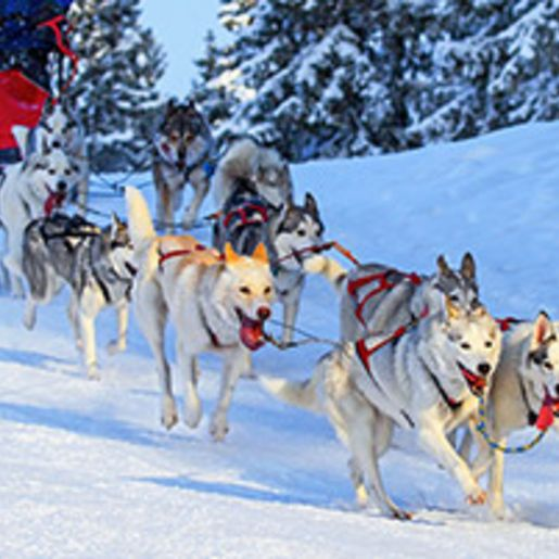 Lappland-Kurzurlaub mit Husky & Rentierschlittenfahrt fuer 2