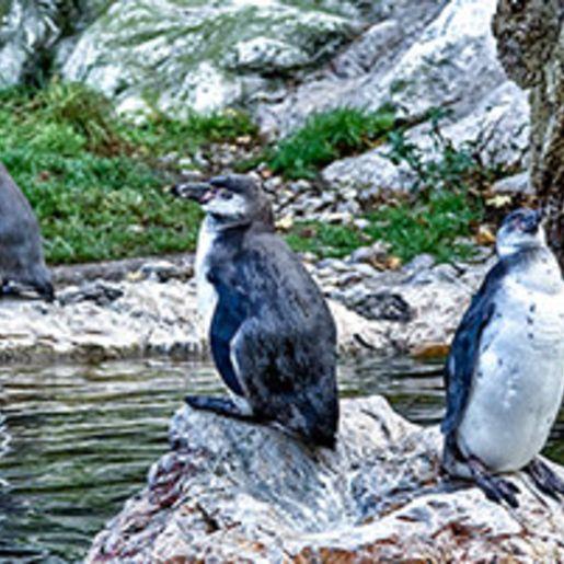 Kurzurlaub Wien mit Tiergarten Besuch fuer 3 (3 Tage)