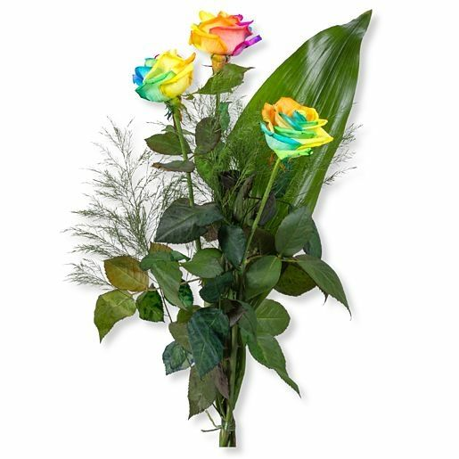 3 Regenbogen-Rosen