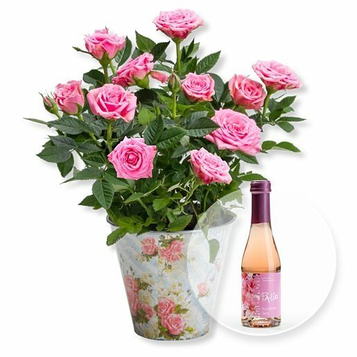 Rosafarbene Rose im romantischen Nostalgie-Topf und Kirschblüten-Secco