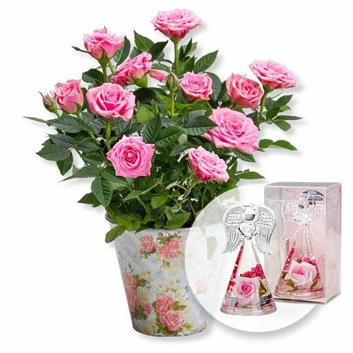 Rosafarbene Rose im romantischen Nostalgie-Topf und Dreamlight Rosen-Engel