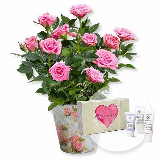 Rosafarbene Rose im romantischen Nostalgie-Topf und Handpflegeset Alles Liebe