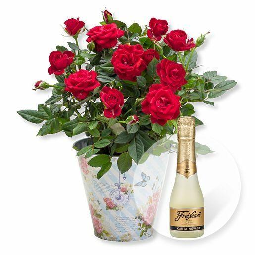 Rote Rose im romantischen Nostalgie-Topf und Freixenet Semi Seco