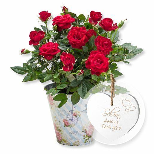 Rote Rose im romantischen Nostalgie-Topf und Vintage-Herz Schön, dass es Dich gibt!