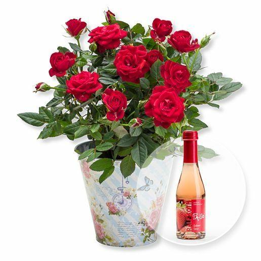 Rote Rose im romantischen Nostalgie-Topf und Alkoholfreier Erdbeer-Secco