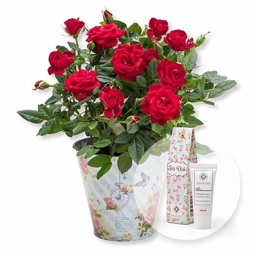Rote Rose im romantischen Nostalgie-Topf und Blütenrausch Pfingstrosen-Handcreme Für Dich
