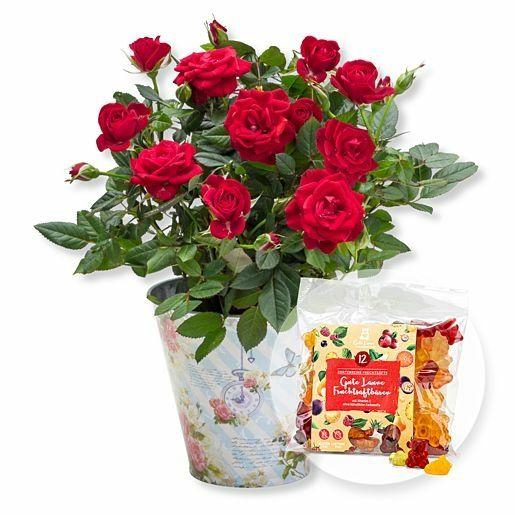 Rote Rose im romantischen Nostalgie-Topf und Gute-Laune-Fruchtsaftbärchen