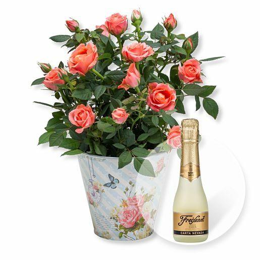 Orangefarbene Rose im romantischen Nostalgie-Topf und Freixenet Semi Seco