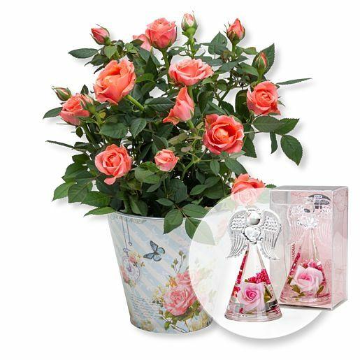 Orangefarbene Rose im romantischen Nostalgie-Topf und Dreamlight Rosen-Engel