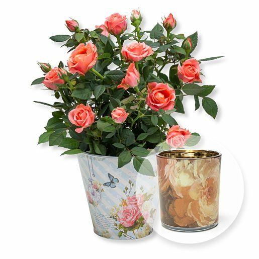 Orangefarbene Rose im romantischen Nostalgie-Topf und Windlicht Rosendekor