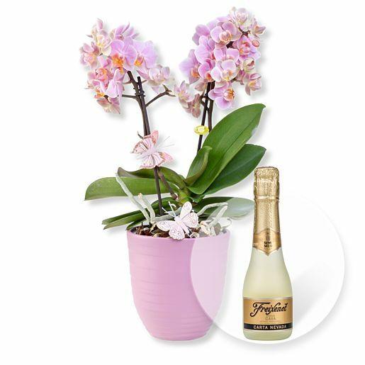 Rosa Orchidee im fliederfarbenem Keramiktopf und Freixenet Semi Seco