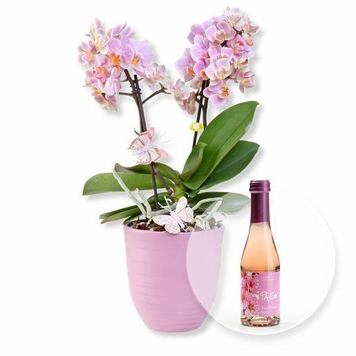 Rosa Orchidee im fliederfarbenem Keramiktopf und Kirschblüten-Secco