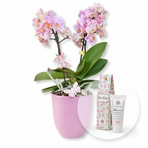 Rosa Orchidee im fliederfarbenem Keramiktopf und Blütenrausch Pfingstrosen-Handcreme Für Dich