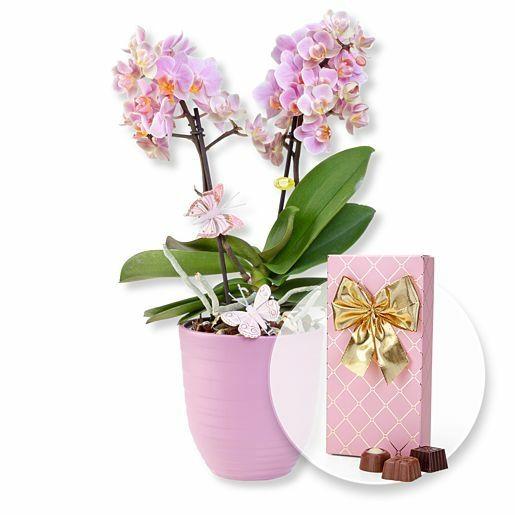 Rosa Orchidee im fliederfarbenem Keramiktopf und Belgische Pralinen-Auslese