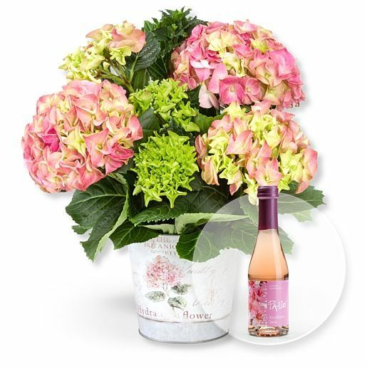 Hortensie im Topf und Kirschblüten-Secco