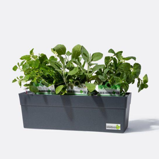 Greenbar® Anthrazit mit Salbei, Pfefferminze, Zitronenmelisse