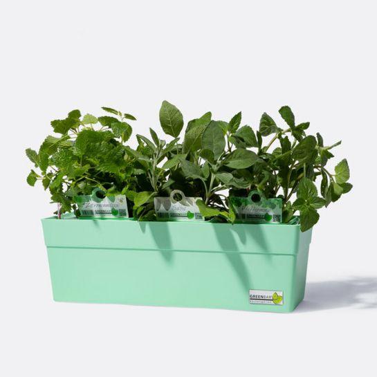 Greenbar® Mint mit Salbei, Pfefferminze, Zitronenmelisse