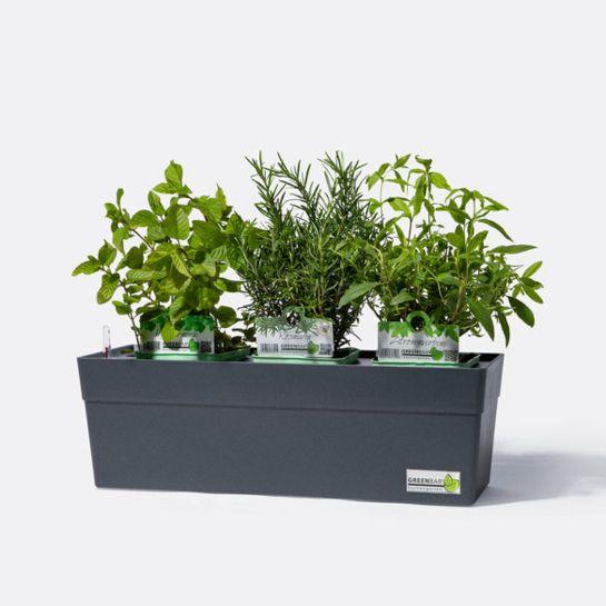 Greenbar® Anthrazit mit Petersilie, Schnittlauch, Basilikum